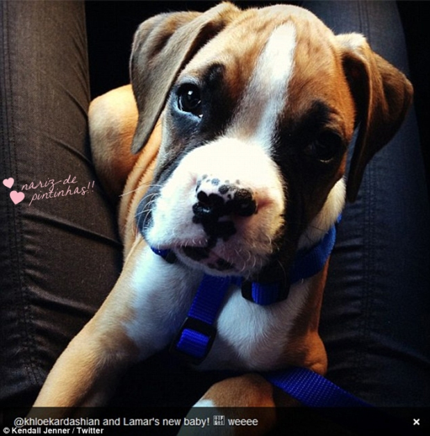 khloe-kardashian-baby-dog-filhote-Bernard-Hopkins-Bee-fofo-lamar-blog-got-sin-08