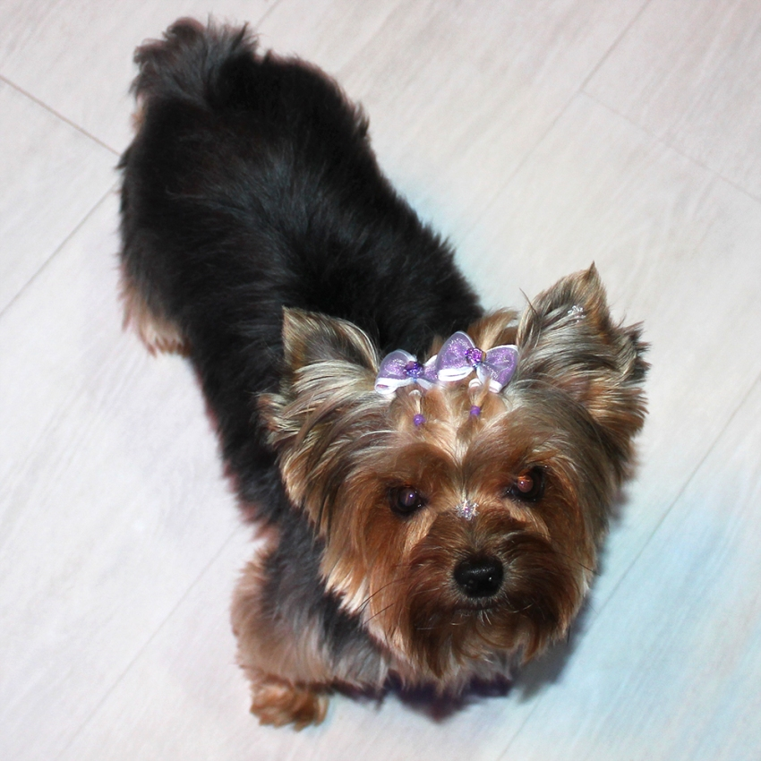 natalie-linda-cachorrinha-yorkshire-coquetel-verao-loja-chris-evert-moinhos-2013-sininhu-sylvia-santini-blog-got-sin-moda-2