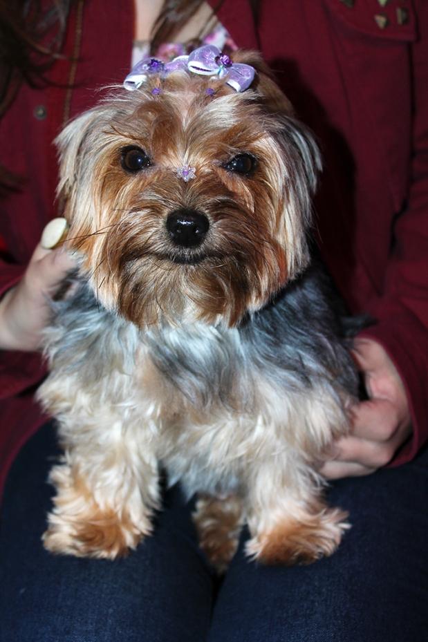 natalie-linda-cachorrinha-yorkshire-coquetel-verao-loja-chris-evert-moinhos-2013-sininhu-sylvia-santini-blog-got-sin-moda