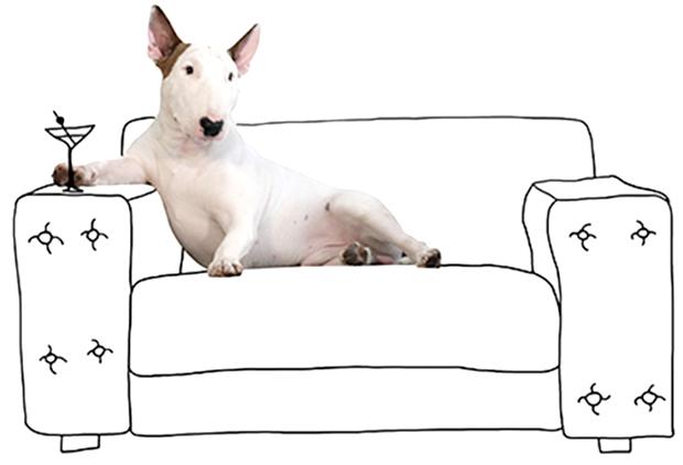 jimmy choo colecao brasileiro rafaela mantesso cachorro instagram blog got sin 6