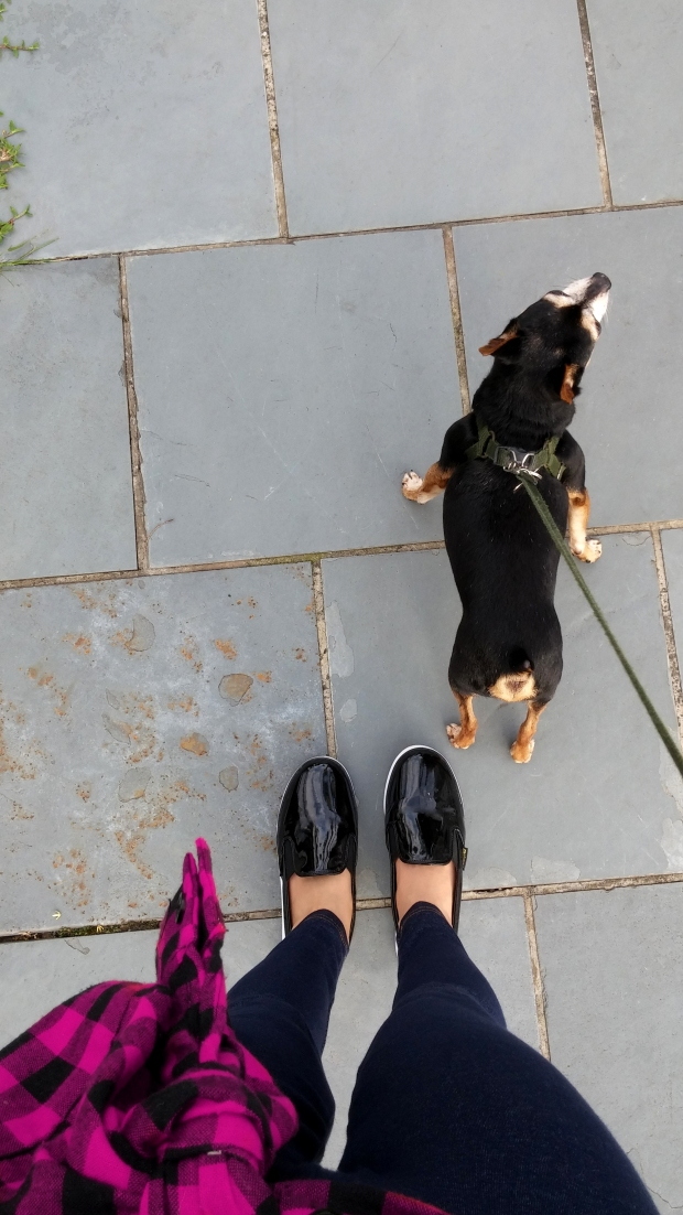 sininhu sylvia santini meu look caminhada blog got sin moda camisa xadrez amarrada regata legging cachoros pinscher cães 06