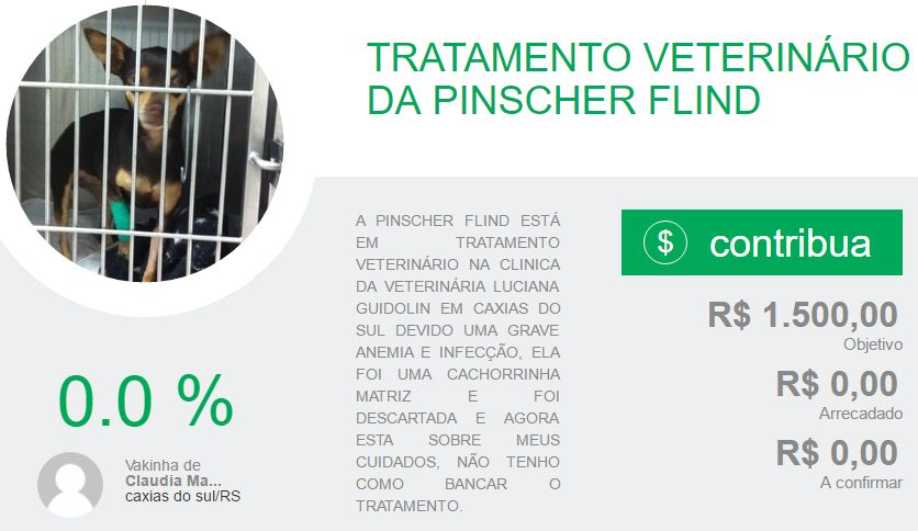 ajude a flind pinscher cachorro doação vakinha online blog got sin 03
