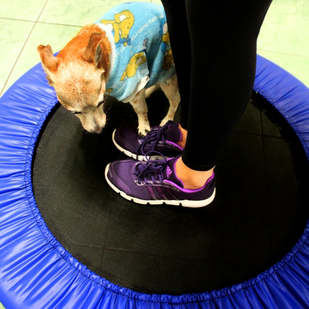 jump-lupi-tenis-adidas-sininhu-sylvia-santini-meu-look-blog-got-sin